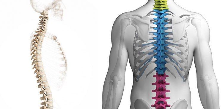 Изменения в позвоночнике грудного отдела
