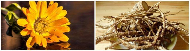 Из календулы и корня лопуха можно приготовить мазь
