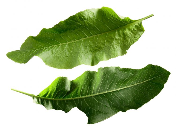 В некоторых случаях терапия листьями хрена может быть противопоказана