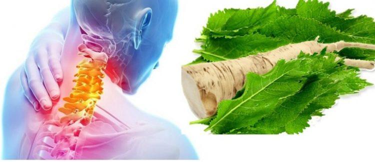 Для лечения остеохондроза можно использовать листья хрена