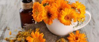 Настой цветков календулы