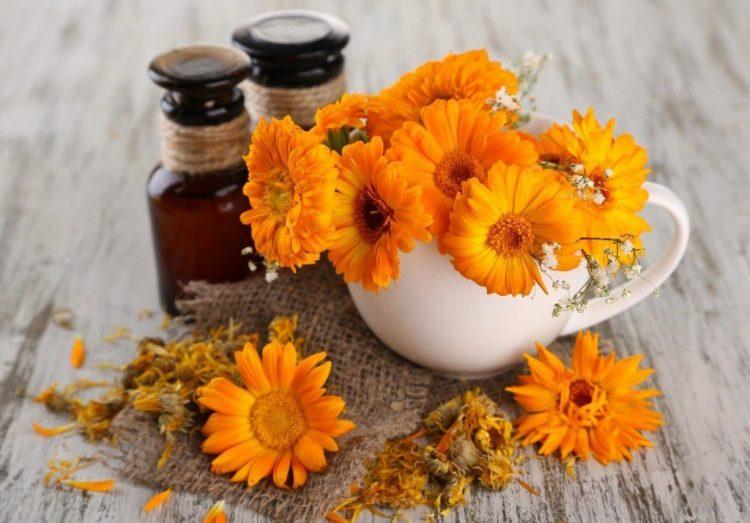Настой цветков календулы используют для растирания