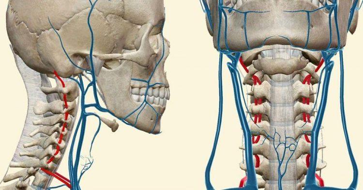 При остеохондрозе шейного отдела могут наблюдаться скачки артериального давления