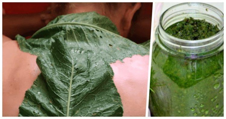 Применять листья хрена можно как наружно, так и вовнутрь