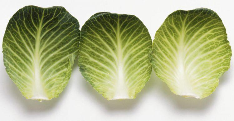 Для компрессов используют капустный лист