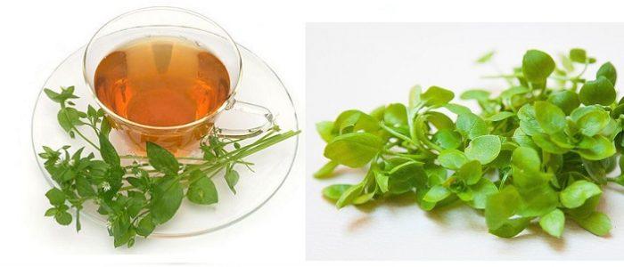 Чай из травы мокрицы
