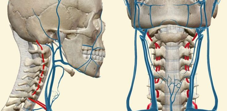 Нарушение кровообращения при остеохондрозе и ВСД