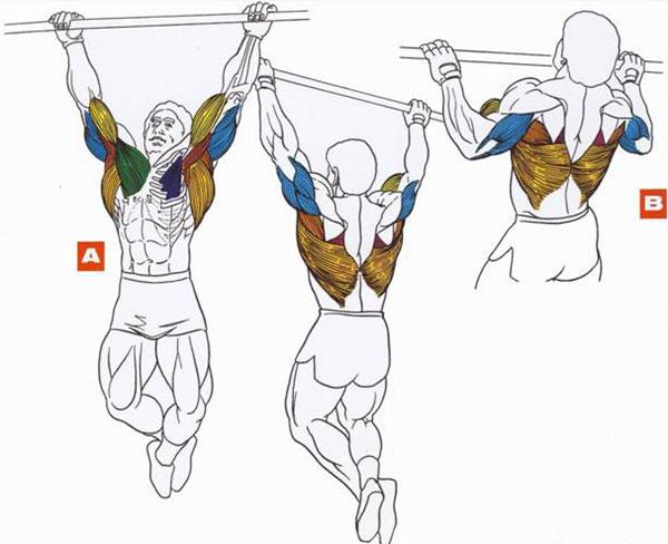 Программа подтягиваний на турнике на массу: схема для роста мышц